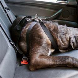 MOT2659 - Arnes coche para perro talla l MTK