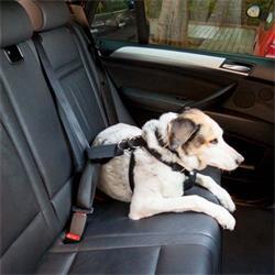 MOT2660 - Arnes coche para perro talla xl MTK
